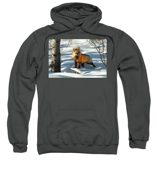 Curious Fox Sweatshirt