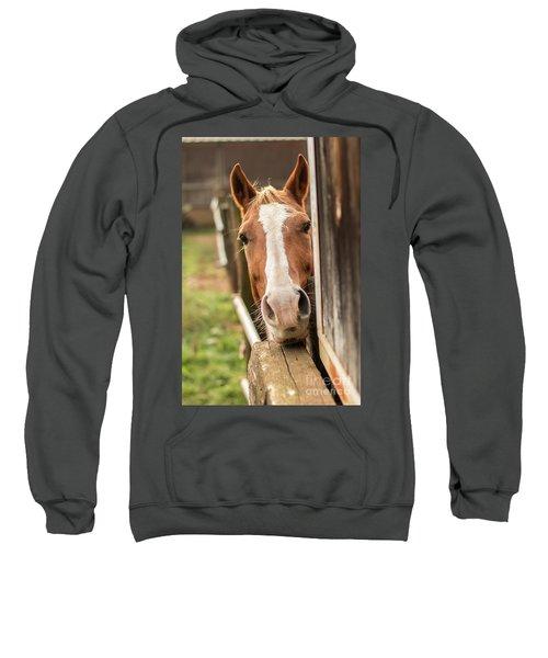 Curious Horse Sweatshirt