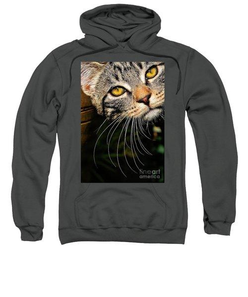 Curious Kitten Sweatshirt