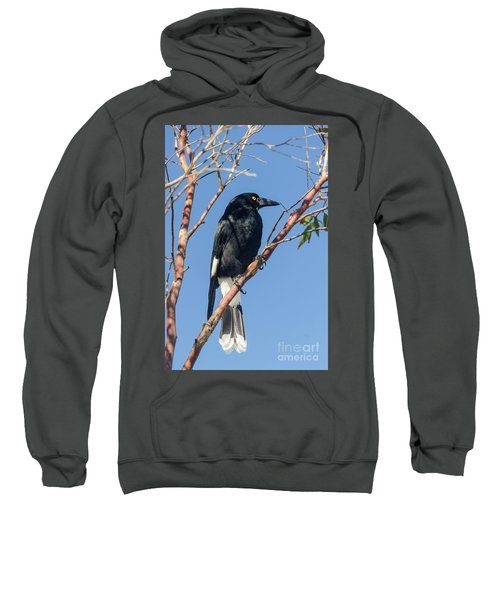 Currawong Sweatshirt