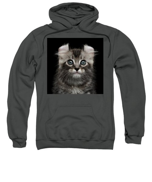 Cute American Curl Kitten With Twisted Ears Isolated Black Background Sweatshirt