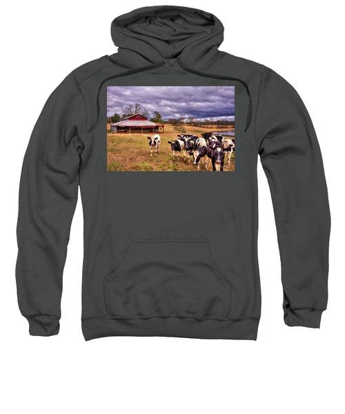 Dairy Heifer Groupies The Red Barn Dairy Farming Art Sweatshirt