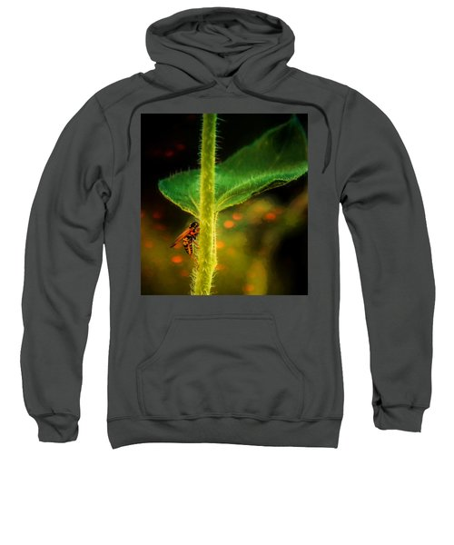 Dance Of The Wasp Sweatshirt