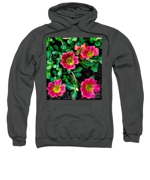 Dark Pink Purselane Flowers Sweatshirt