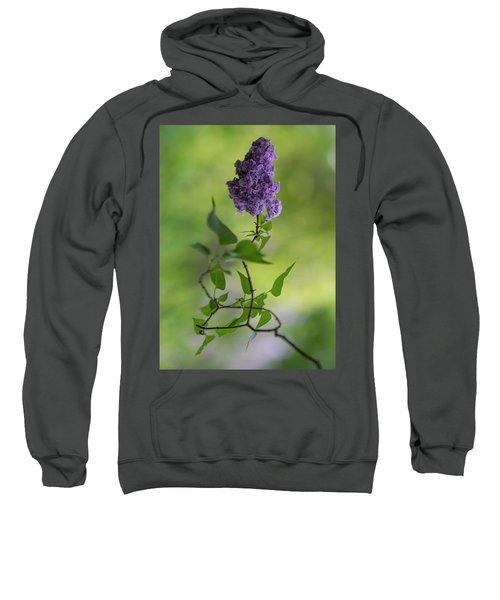 Dark Violet Lilac Sweatshirt