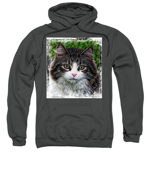 Decorative Maine Coon Cat A4122016 Sweatshirt