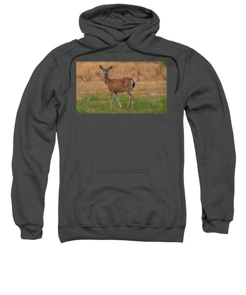 Deer At Sunset Sweatshirt