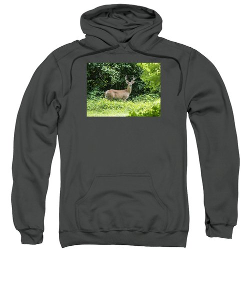 Eastern White Tail Deer Sweatshirt