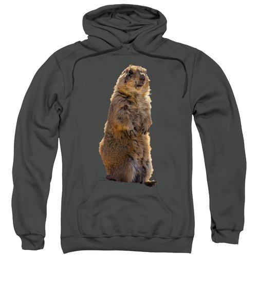 Desert Dawg Sweatshirt