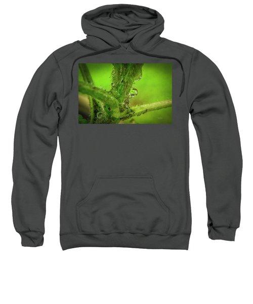 Dew Drop Closeup Sweatshirt
