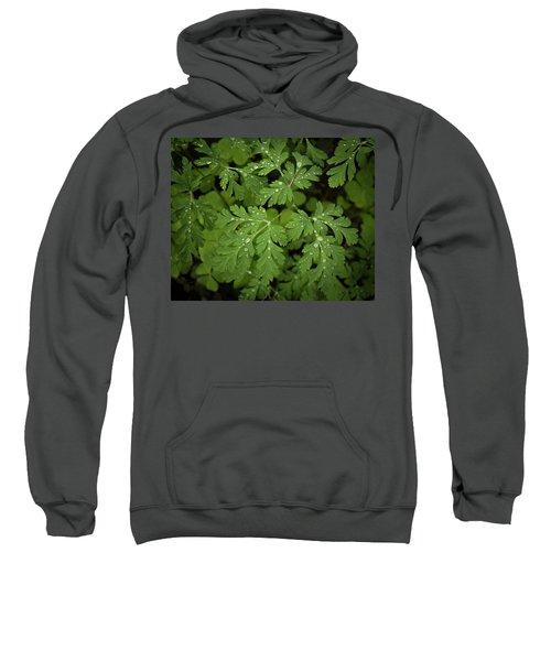 Dewey Leaves Sweatshirt
