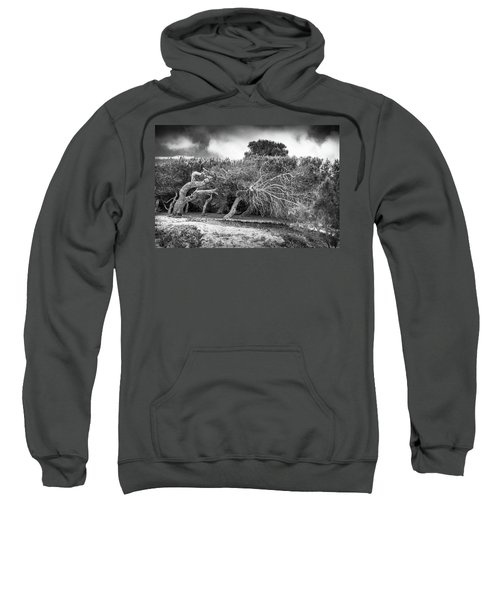 Distorted Trees Sweatshirt