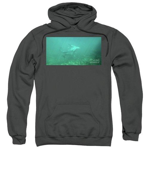 Sweatshirt featuring the photograph Dolphin Swim by Francesca Mackenney
