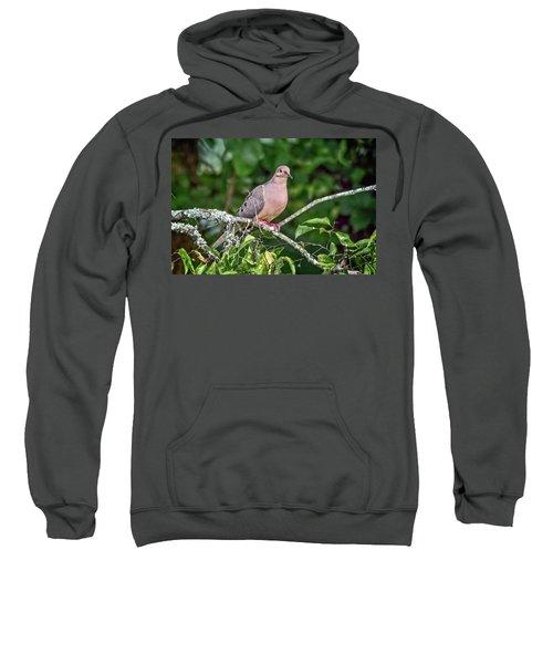 Dove On A Branch Sweatshirt
