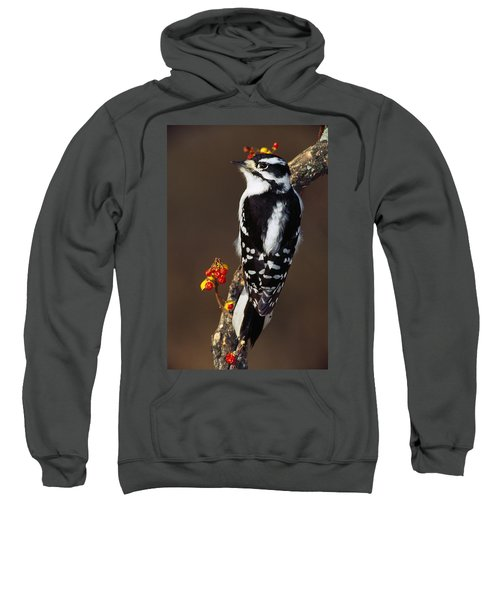 Downy Woodpecker On Tree Branch Sweatshirt by Panoramic Images