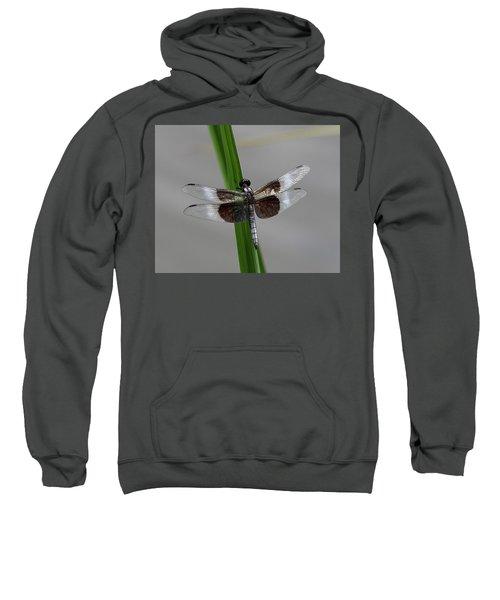 Dragon Fly Sweatshirt