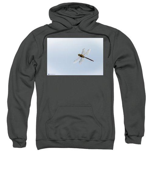Dragonfly In Flight Sweatshirt
