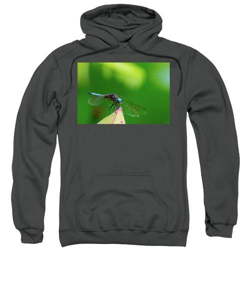 Dragonfly On Lotus Bud Sweatshirt