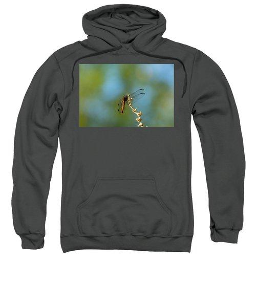 Dragonfly Wings Sweatshirt