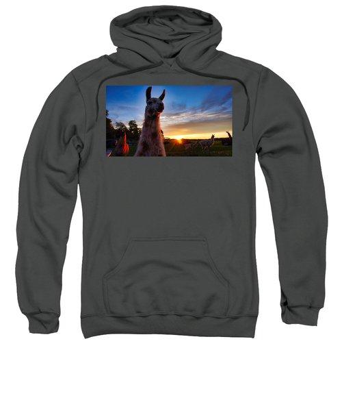 Drama Llamas Sweatshirt