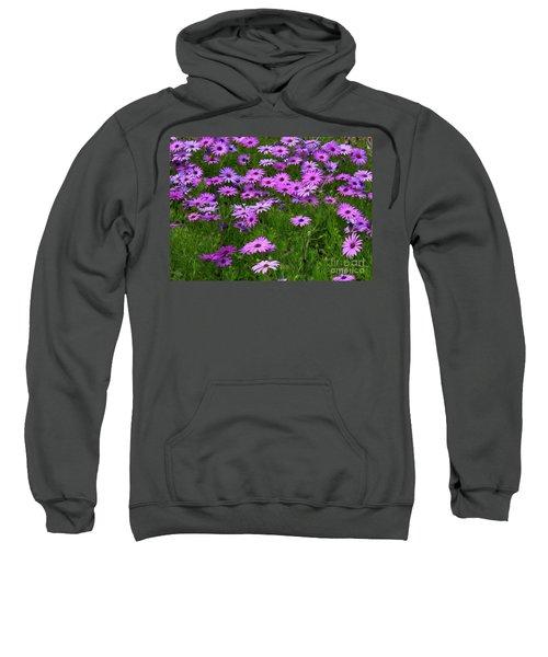 Dreaming Of Purple Daisies  Sweatshirt