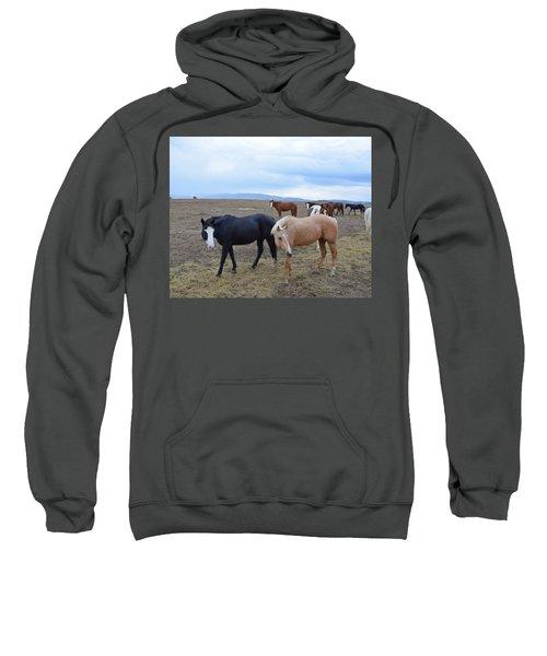 Dreaming Of Wild Horses Sweatshirt