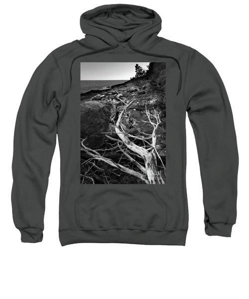 Driftwood Tree, La Verna Preserve, Bristol, Maine  -20999-30003 Sweatshirt