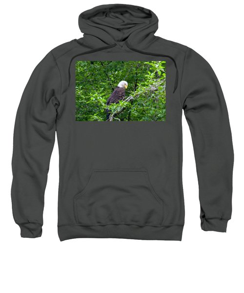 Eagle In The Tree Sweatshirt