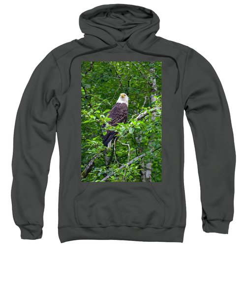 Eagle In Tree Sweatshirt