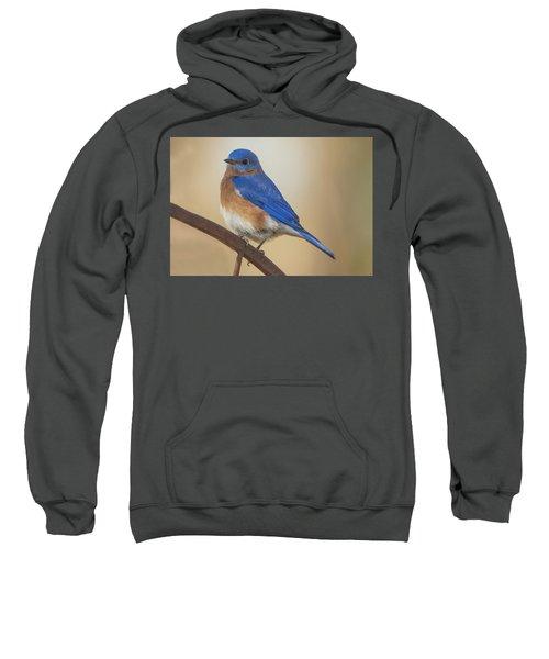 Eastern Blue Bird Male Sweatshirt