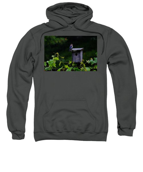 Eastern Bluebird In The Rain Sweatshirt