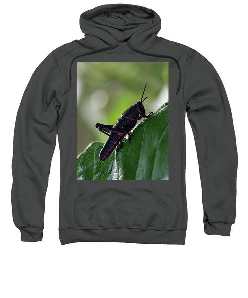 Eastern Lubber Grasshopper Sweatshirt by Richard Rizzo