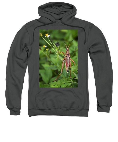 Eastern Lubber Grasshopper  Sweatshirt by Saija  Lehtonen