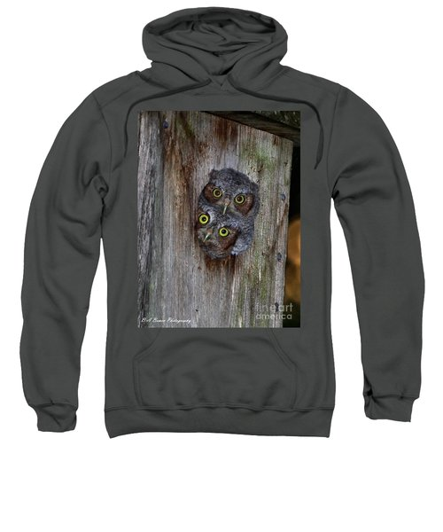 Eastern Screech Owl Chicks Sweatshirt