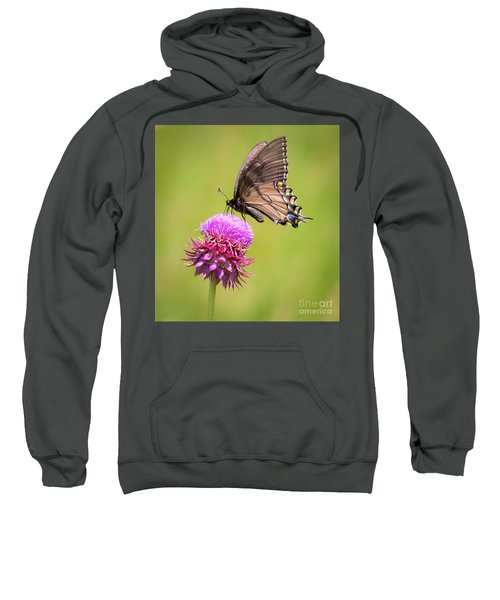 Eastern Tiger Swallowtail Dark Form  Sweatshirt