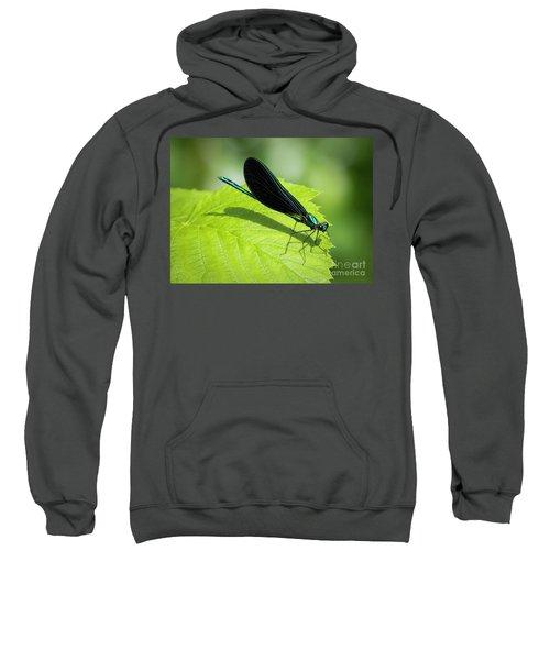 Ebony Jewelwing Sweatshirt
