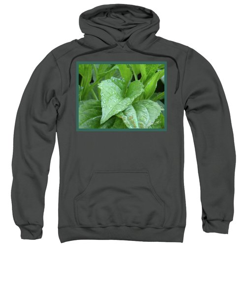 Echinacea After The Rain I Sweatshirt