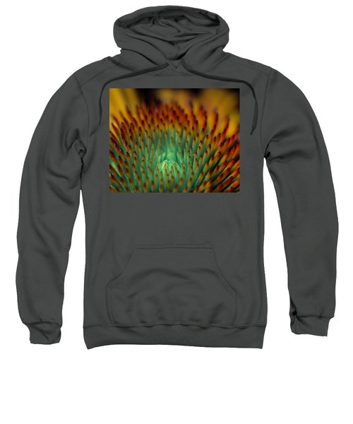 Echinacea Macro Sweatshirt