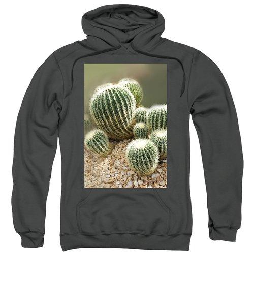 Echinocactus Grusonii  Sweatshirt