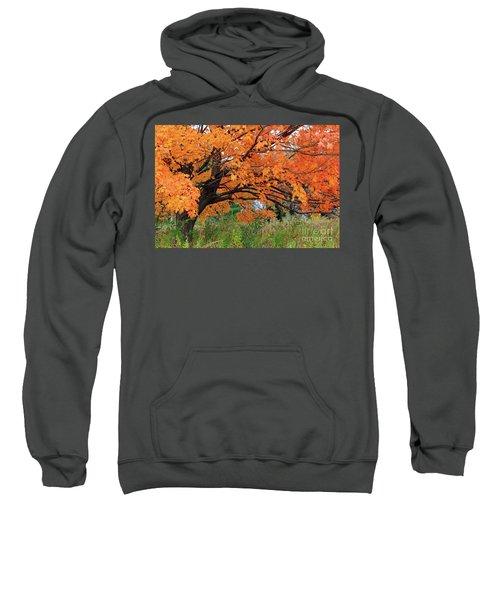 Edna's Tree Sweatshirt