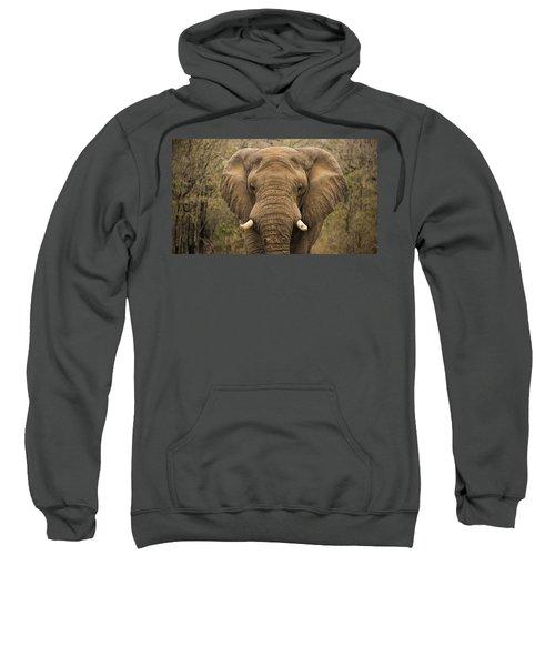 Elephant Watching Sweatshirt
