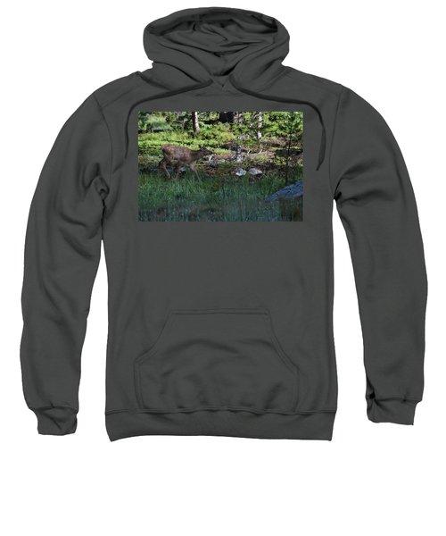 Baby Elk Rmnp Co Sweatshirt