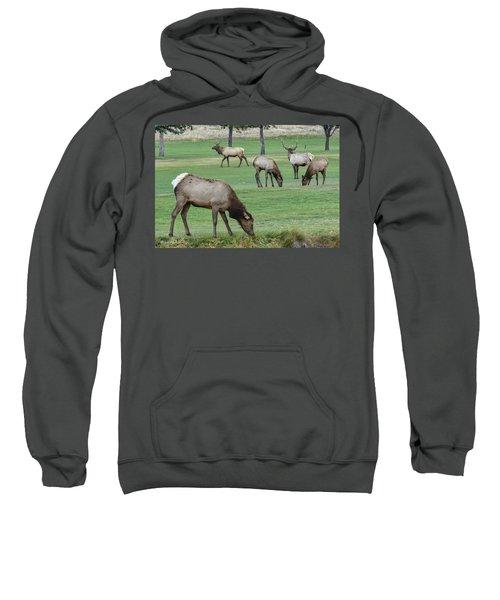 Elk On Golf Course Estes Park Colorado Sweatshirt