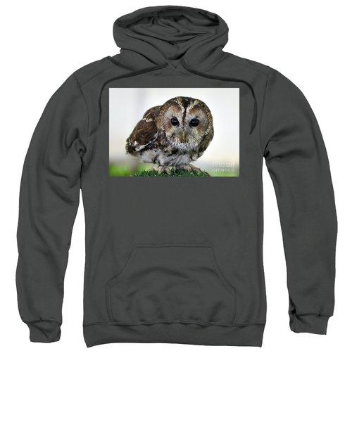 Eurasian Tawny Owl Sweatshirt