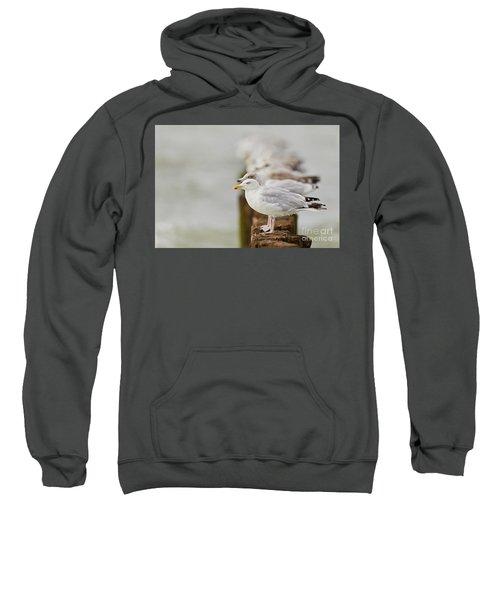 European Herring Gulls In A Row Fading In The Background Sweatshirt