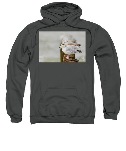 European Herring Gulls In A Row Fading In The Background Sweatshirt