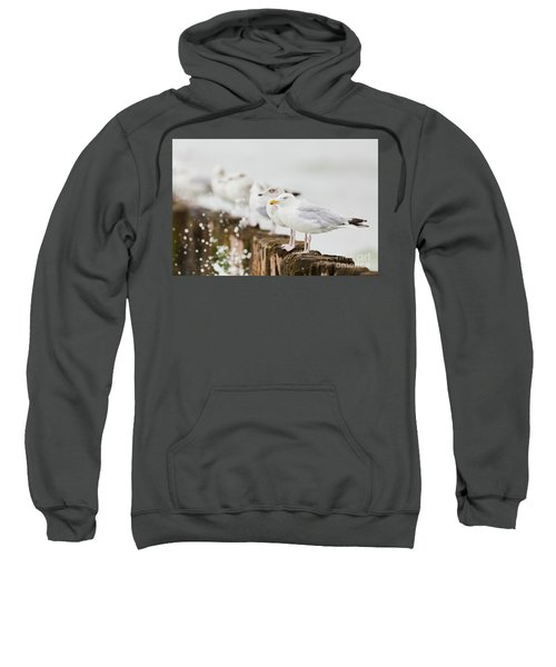 European Herring Gulls In A Row  Sweatshirt