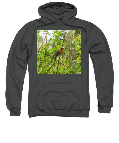 European Robin Sweatshirt