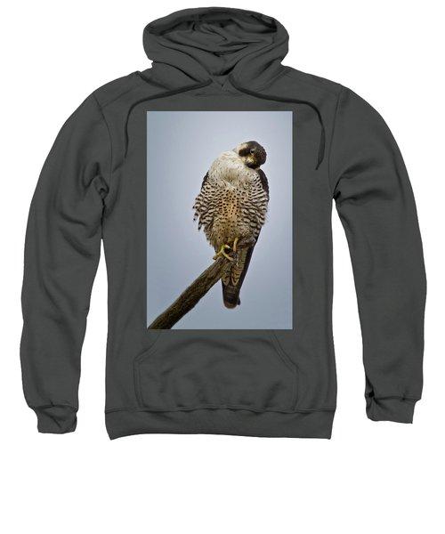 Falcon With Cocked Head Sweatshirt