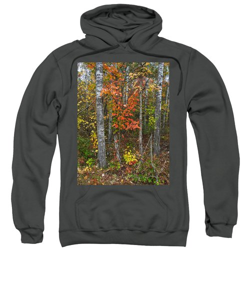 Fall Color At Gladwin 4543 Sweatshirt